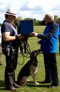 Most improved rescue dog presentation